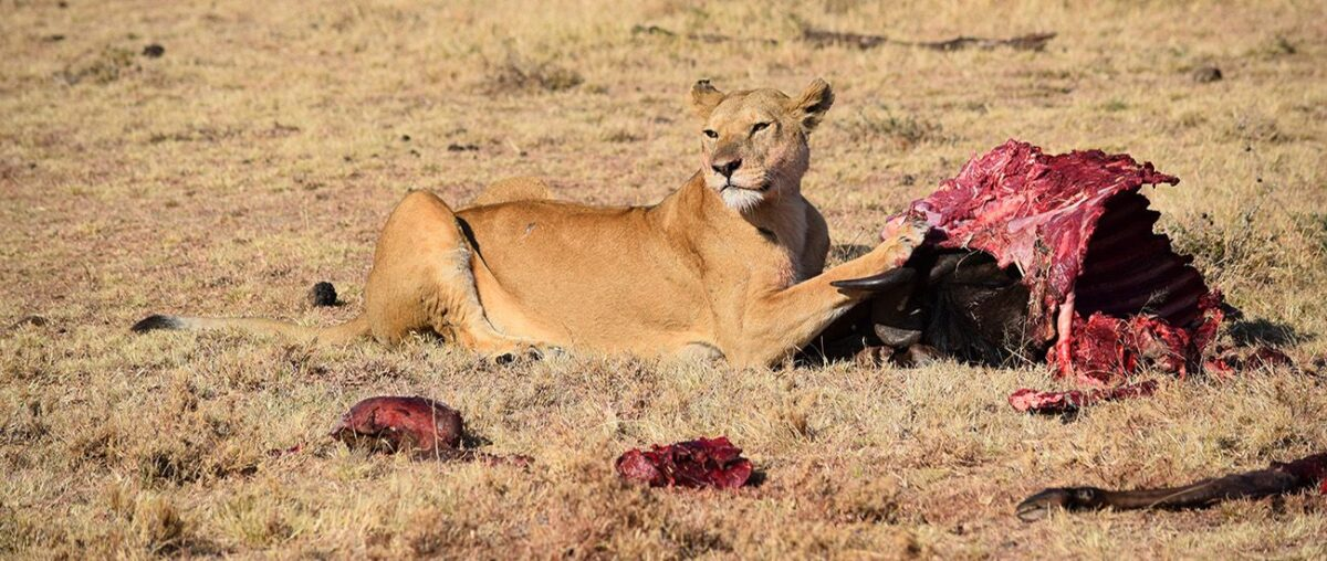Professional safari tour operator gives a thrilling travel experience